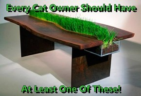 Every Cat Owner Should Have  At Least One Of These!