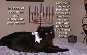 May the 9 candles of Hanukkah symbolize 9 new lives for each kitteh who has borne  such illness as did Sonni