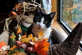 10 Ways Cats Enjoy Thanksgiving