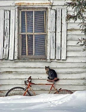Time for a Ride?  What Snow?