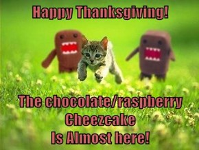 Happy Thanksgiving!  The chocolate/raspberry Cheezcake                                                   Is Almost here!