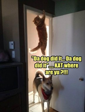 """Da dog did it... Da dog did it""..... KAT where are yu ?!!!"