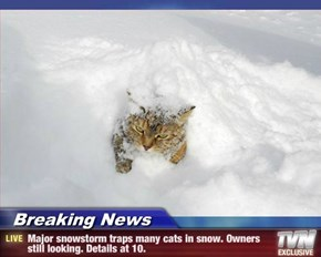 Breaking News - Major snowstorm traps many cats in snow. Owners still looking. Details at 10.