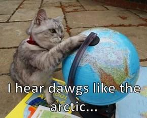 I hear dawgs like the arctic...