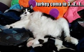 turkey coma in 3...2...1...