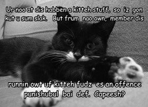 Ur noo at dis habben a kitteh stuff,  so  iz  gon kut u sum slak.   But frum  nao own,  member dis