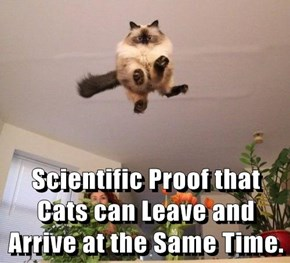 Scientific Proof that Cats can Leave and Arrive at the Same Time.