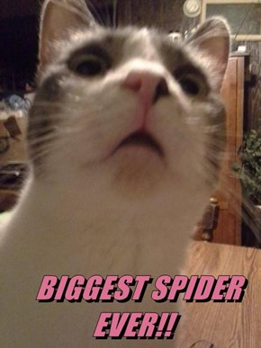 BIGGEST SPIDER EVER!!