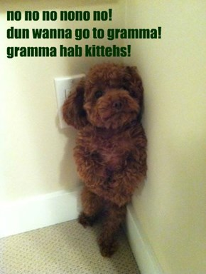 no no no nono no! dun wanna go to gramma! gramma hab kittehs!