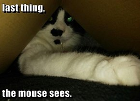 last thing,  the mouse sees.