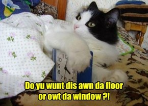 Do yu wunt dis awn da floor or owt da window ?!