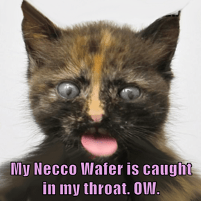 My Necco Wafer is caught in my throat. OW.