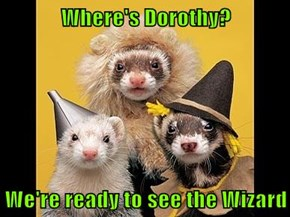 Where's Dorothy?  We're ready to see the Wizard