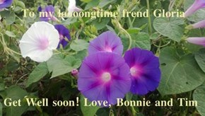 To my loooongtime frend Gloria  Get Well soon! Love, Bonnie and Tim