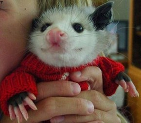 Jus Playin Possum