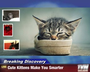 Breaking Discovery - Cute Kittens Make You Smarter