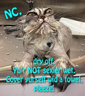 NC came in 3rd in the National Wet T-Shirt Contest. She's the only one that showed up.  The mouse 'n the drunk, who was out cold, came first 'n second