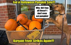 End of Halloween Pumpkin Sale!!!