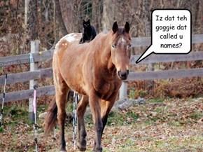 Goggie...u shud run