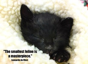 """The smallest feline is a masterpiece."""