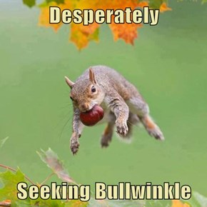 Desperately   Seeking Bullwinkle