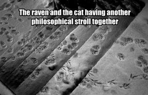The raven and the cat having another philosophical stroll together