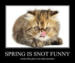 SPRING IS SNOT FUNNY