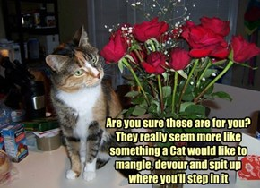 How Cat's See Flowers