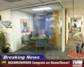 Breaking News -  BGCMEOWRRRR Congrats on Name/Decor!