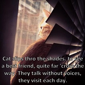 Cat slips thro the shades. to see a best friend, quite far 'cross the way. They talk without voices, they visit each day.