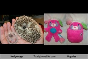 Hedgehogs Totally Looks Like Popples