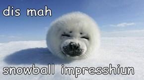 dis mah  snowball impresshiun