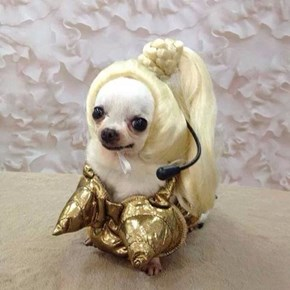 This Dog in Drag Might Actually look Better Than Madonna