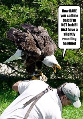 And My Talons are as Sharp as Ever!