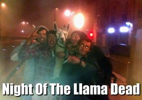 Night Of The Llama Dead