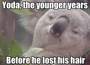 A hairless koala, Yoda is.