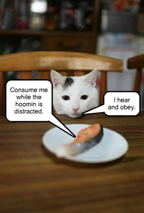 Salmon Says...