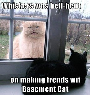 Whiskers was hell-bent  on making frends wif Basement Cat