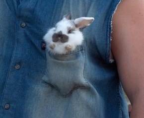 Don't Let Your Pocket be Square, Accessorize with a Hare!