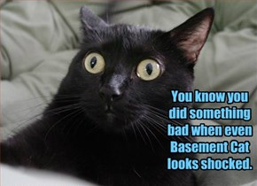 You know you did something bad when even Basement Cat looks shocked.