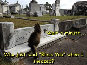 "Wait a minute... Who just said ""Bless You"" when I sneezed?"