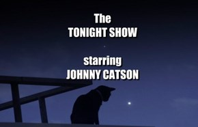 Late Night on NBC (Nothing But Cats)
