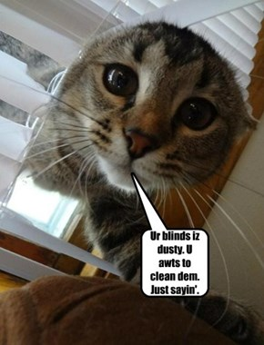 Ur blinds iz dusty. U awts to clean dem. Just sayin'.