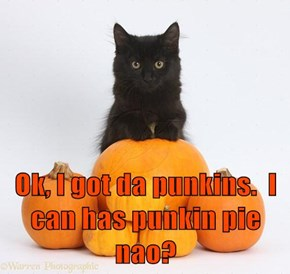 Ok, I got da punkins.  I can has punkin pie nao?
