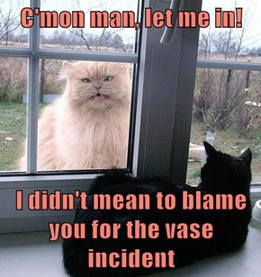 Inside Cat is Angry at Outside Cat