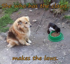 She who has the claws,  makes the laws.