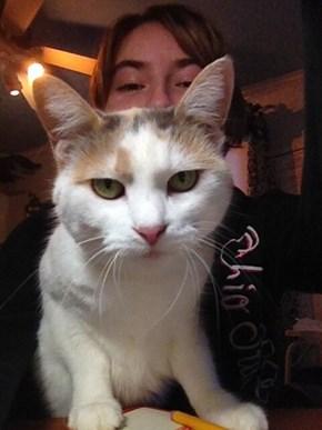 Another Selfie Catbombed