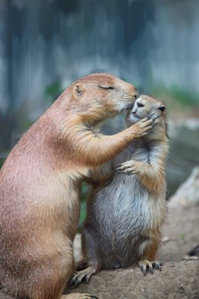 Gopher Love