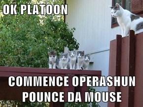 OK PLATOON  COMMENCE OPERASHUN POUNCE DA MOUSE