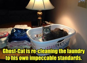 Ghost-Cat is re-cleaning the laundry to his own impeccable standards.